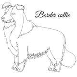 Border Collie dog outline Stock Images