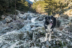 Border Collie dog on rocks beside river in Corsica Stock Photos