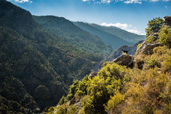 Border collie dog on rocky outcrop in Corsica Royalty Free Stock Photos