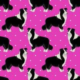 Border Collie Dog Seamless Pattern Royalty Free Stock Image