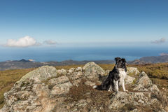 Border Collie dog sitting on rocky outcrop with Mediterranean se Royalty Free Stock Images