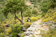 Border Collie dog in the Tartagine valley in northern Corsica Royalty Free Stock Image