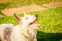 Border collie dog wating for food in the sun light Stock Photos
