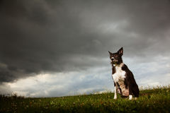 Border Collie With Dramatic Sky. Border Collie sitting outside with storm clouds comming stock photography