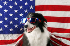 Border collie in front of a USA flag with sunglasses Royalty Free Stock Photo