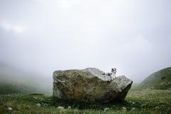 Border collie-hondzitting op een groot natuursteen stock afbeeldingen