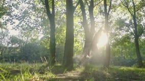 Border collie hoppar högt för frisbee i solskenet utomhus, ultrarapid arkivfilmer