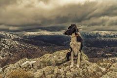 Border collie-Hund, der auf Felsen mit Schnee sitzt, bedeckte Berge herein Stockfotografie