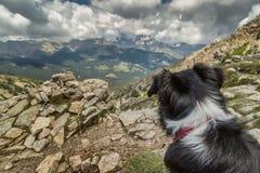 Border collie-Hund, der heraus über korsischen Bergen schaut Lizenzfreies Stockbild