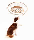 Border collie lindo que sueña sobre la comida Foto de archivo