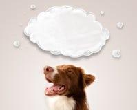 Border collie mignon avec le nuage vide Image libre de droits