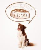 Border collie mignon rêvant de la nourriture Photos libres de droits