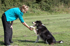 Border Collie with Owner stock photography