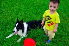 Border collie pour attraper un frisbee images stock