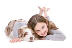 Border Collie puppy dog Royalty Free Stock Photo