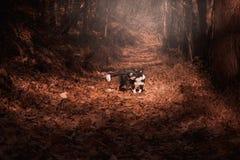 Border collie-puppy het spelen in de de herfstbladeren Stock Afbeelding