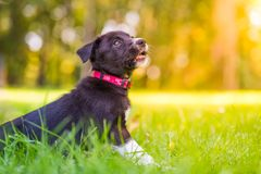 Puppy in the grass having fun and relaxing stock photo