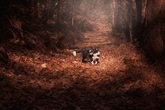 Border Collie puppy playing in the autumn leaves Stock Image
