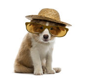 Border Collie puppy wearing a straw hat and glasses Stock Photo