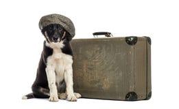 Border collie que se sienta al lado de una maleta vieja Fotografía de archivo libre de regalías