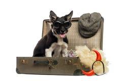 Border collie que senta-se em uma mala de viagem velha do vintage completamente do accesso Imagem de Stock Royalty Free