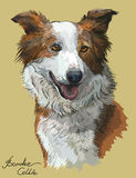 Border collie red color Royalty Free Stock Photo
