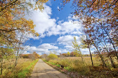 Border collie, rural road, autumn Stock Photography