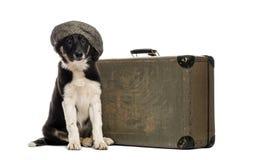 Border collie sammanträde bredvid en gammal resväska arkivfoton