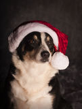 Border Collie with santa hat. A border collie wearing a santa hat on a grey background Stock Photography