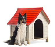 Border Collie sitting next to a kennel and looking away against white background