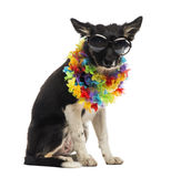 Border collie sitting and wearing sunglasses and a hawaiian lei Stock Photos