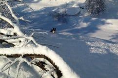 Border collie som ligger i snön Royaltyfri Foto