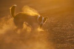Border collie-Sonnenuntergang lizenzfreies stockfoto