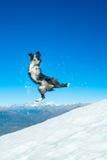 Border collie-sprongen in de sneeuw Royalty-vrije Stock Fotografie