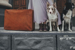 Border collie with suitcase. Waiting for train Stock Image
