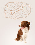 Border collie with thought bubble thinking about a bone Royalty Free Stock Image