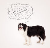 Border collie with thought bubble thinking about a bone Stock Image
