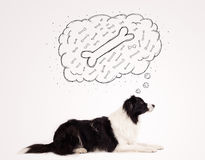 Border collie with thought bubble thinking about a bone Royalty Free Stock Photos