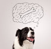Border collie with thought bubble thinking about a bone Royalty Free Stock Photography