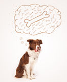 Border collie with thought bubble thinking about a bone Stock Photography