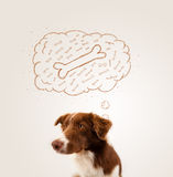 Border collie with thought bubble thinking about a bone Stock Photos