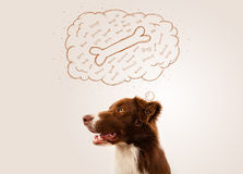 Border collie with thought bubble thinking about a bone Royalty Free Stock Images