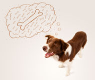 Border collie with thought bubble thinking Royalty Free Stock Photo