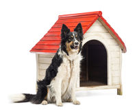 Border Collie tied next to a kennel Stock Photos