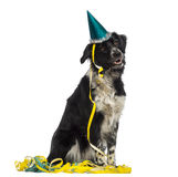 Border Collie wearing a party hat and sitting in serpentines Royalty Free Stock Images