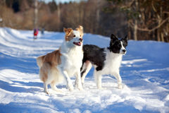 Two Dog Royalty Free Stock Images