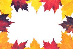 Border of colored Autumn maple leaves. Colorful Autumn border of bright maple leaves with copy-space Royalty Free Stock Image