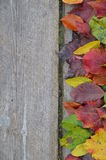 Border of colorful autumn leaves on wood Stock Photos