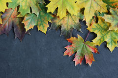 Border of colorful autumn maple leaves Royalty Free Stock Photos