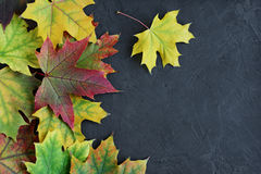 Border of colorful autumn maple leaves Stock Photography